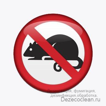 Дератизация — грызуны крысы мыши