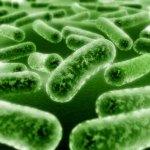 Дезинфекция микробов