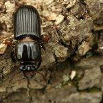 Дезинсекция от жука короеда