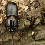 Уничтожение жуков древоточцев