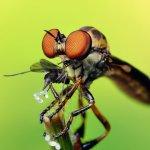 Избавление от насекомых, дезинсекционная обработка