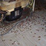 Образ жизни тараканов