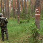 Лесопатолог обходит лес