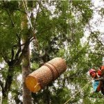 Удаление дерева с завешиванием