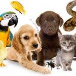 Удаление запаха животных