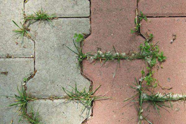 сорняки в плитке