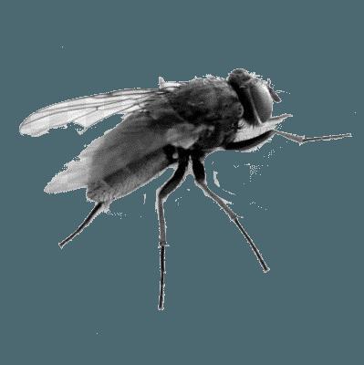 Уничтожение насекомых - цены в службе по уничтожению и борьбе с насекомыми в квартире в Москве в Центре ДЕЗУСЛУГ