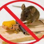 Народные методы избавления от крыс