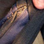 Перенос клопов в одежде