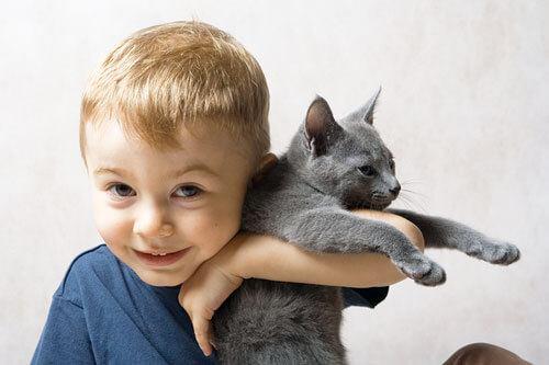 Принести клопов могут домашние животные