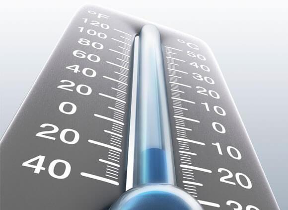 При какой температуре замерзают тараканы