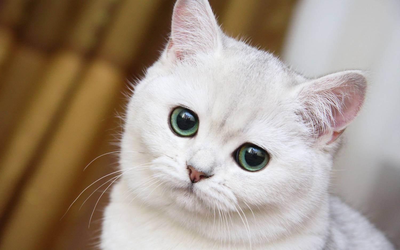 Кусают ли клопы кошек и других животных: найти и устранить