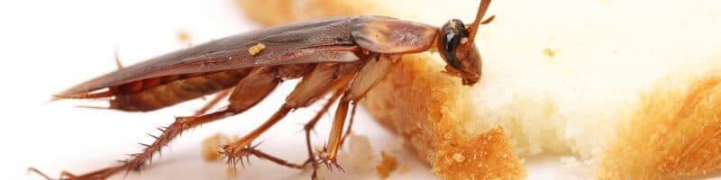 Можно ли убить таракана в москве