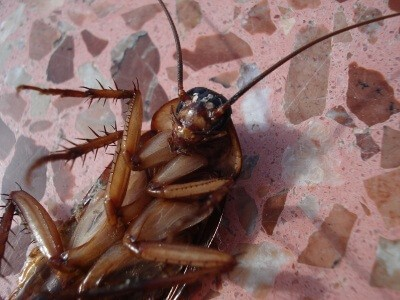 cockroach 15093 960 720